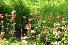 初夏の箱根♪ Vol.15 ☆箱根湿生花園:美しい初夏の風景♪