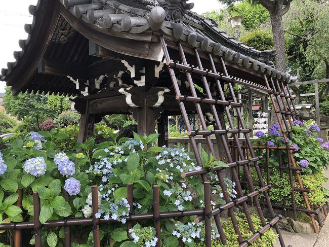 以前に白山神社に紫陽花を見に行ったのは6年前<br /><br />文京あじさいまつり@白山神社<br />https://4travel.jp/travelogue/10897928<br /><br />今年は、このサイトにあるように、令和2年6月13日(土曜日)~21日(日曜日)に予定されていたあじさいまつりは新型コロナの影響で開催中止になっています。<br />【中止】「第36回文京あじさいまつり」<br />https://www.city.bunkyo.lg.jp/ajisai.html<br /><br />それでもあまり遠出もできないカメラマンが何人もせっせと紫陽花を撮っていました。