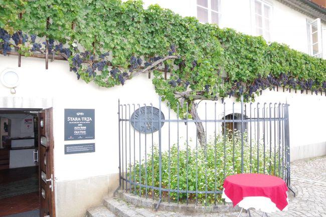 ここはワインもあるのです バルカン半島の旅 8日目(ツェリエ→マリボル→リュブリャナ→ブリュッセル)