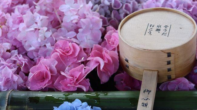 6月19日から県外への外出がOK~!<br />ならばまず最初に行きたいのはやっぱり京都(笑)<br />以前から『柳谷観音 楊谷寺』の花手水を一度見てみたい!<br />と思っていたので、観光は『柳谷観音』で決定☆<br />そしてグルメはいつものお店『ヴィナイーノキョウト』へ♪<br />ファビオの顔が見たい~とお店も迷わず決定(⌒▽⌒)<br />それ以外は、、、<br />かき氷も食べたいな♪<br />帰る前にはまた飲みたいな(笑)<br />そんな感じで『柳谷観音』以外は食べて飲むだけのプラン(*´ω`*)<br /><br />『柳谷観音 楊谷寺 』では花手水を求めて、すんごい人で<br />ちょっと恐ろしい感じでしたが、お天気に恵まれ久々の京都を<br />満喫しました♪(*^^)o∀*∀o(^^*)♪