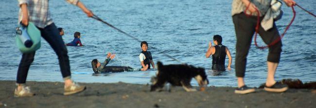 ほぼ一月ぶりにヘッドエンドに出てみました。波は静かだったせいかサーファーがいませんでしたが、人出・犬出は復活しました。残念ながら富士は拝めませんでしたが・・・。