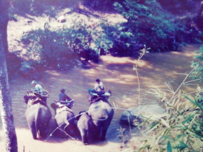 チェンマイから日帰りトレッキングツアーに参加しました。<br /><br />朝8時頃マイクロバスで山岳民族の住む山の近くまで行き、今にも壊れそうな、竹の橋を渡り山道をしばらく歩くと、その村はありました。<br /><br />そこから象に乗って川辺迄下山し、今度は小鳥がさえずるジャングルの中の川を筏で下って行くツアーです。<br /><br />数年後家族でも来ましたが、ちびっ子は達は象に乗ったり、筏を漕がせてもらったりしてとても喜んでいました。