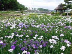 2020年6月 山口県・宇部市 ときわ公園で菖蒲を見ました。鴨が石橋に休んでいます。