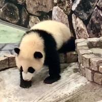 南紀白浜にパンダを見に行こう!ツアー