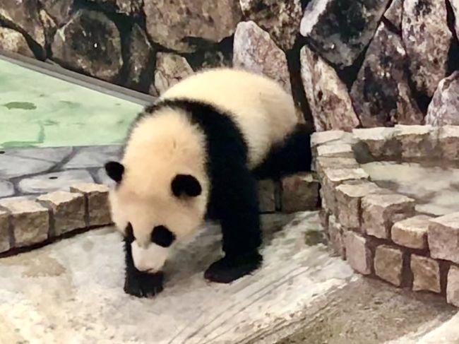 孫姫が、3歳になりました。初めて遠出の旅行をして、アドベンチャーランドで孫姫にパンダを見せたいと思って、3泊4日のツアーを企画しました。