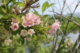 初夏の箱根♪ Vol.21 ☆箱根湿生花園:美しい初夏の風景♪