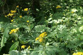 初夏の箱根♪ Vol.22 ☆箱根湿生花園:美しい初夏の風景♪