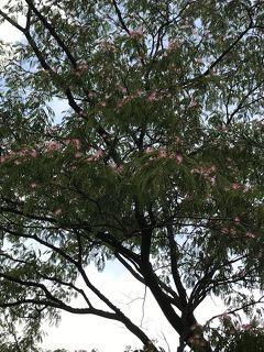 花を求めて 散歩しながら見た6月の花々