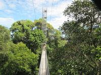 ボルネオ島でジャングル体験