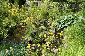 初夏の箱根♪ Vol.25 ☆箱根湿生花園:美しい初夏の風景♪
