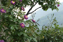 初夏の箱根♪ Vol.40 ☆箱根ガラスの森美術館:美しい初夏の風景♪