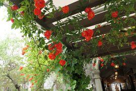 初夏の箱根♪ Vol.42 ☆箱根ガラスの森美術館:美しい初夏の風景♪