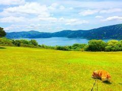 箱根温泉にペットと一緒に宿泊!星の王子さまミュージアムや絶景ドッグランなどの観光も!