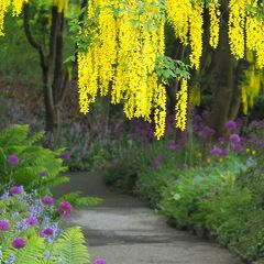 満開に間に合った!コロナ自粛下のバンデューセン植物園 バンクーバー