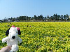 糸島をめぐる(雷山観音・浮岳茶寮でのランチ・菜の花畑など)◆2018年春/旅仲間と行く長崎・博多・糸島《その10》