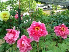 関西花の寺巡り 奈良県南部、播磨、滋賀方面に