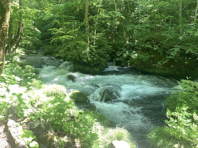 十和田湖の休屋と奥入瀬渓流の中間あたりの石ケ戸から雲井の滝までの3kmの渓流を往復で散策した。歩いていると滝が現れて飽きない散策路できちんと整備されていて案内板もあり歩きやすかったです。