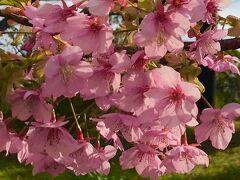 2020年 春休み親子旅は湯河原と箱根の温泉へ☆小田原城登城後に東京へ。そして、帰宅。今年はライラックにも異変が?!