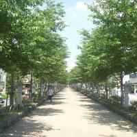 大船泊、鎌倉旅行。