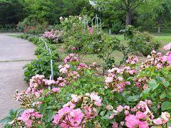 Japan 病院の待ち時間に芝公園へ 2    ~ミツバチばあやの冒険~