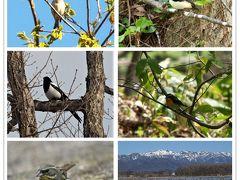 思ひ出つづり⑥ 徒然に野鳥たち。in北海道♪