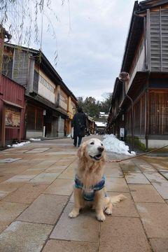 Gレトリバーと行く、高山わんぱら雪遊び!3日目(2018年1月)