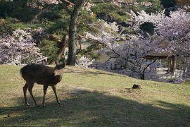 関西散歩記~2020 奈良・奈良市編~その3