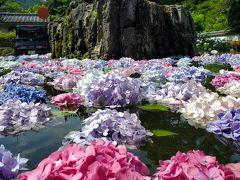"""""""紫陽花が浮かぶ池""""「久安寺」&ちょこっと「池田城跡公園」"""