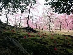 【3日目】こだわり姉妹旅 ~嵐山・伏見で梅を愛でる~