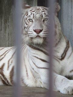 南東北の動物園と水族館めぐり⑤ 【宇都宮動物園】