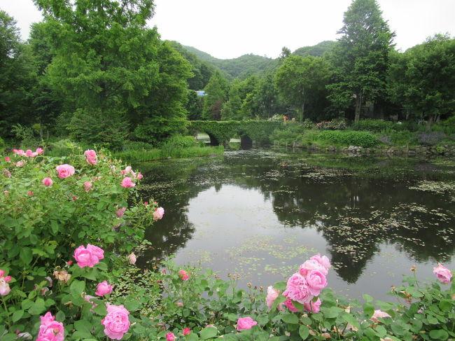 軽井沢のバラ園といえば、軽井沢レイクガーデンと軽井沢タリアセン。何年も前から存在は知っていたものの、新幹線と2時間に1本位のバスを使わないとたどり着けないということで、訪問するのが先伸ばしになっていました。しかし自由に外出できるありがたさを知った今年、とうとう日帰りで訪れることができました。<br /> なお、この日の旅程は下記のとおりです。 <br /> 10時8分、新幹線で軽井沢駅着。<br /> 10時50分、軽井沢駅から、軽井沢町内循環バス(東・南廻り線)に乗車。<br /> 11時1分、ニュータウン入口(レイクガーデンの前にあるバス停)着。<br /> 13時31分、ニュータウン入口から、軽井沢町内巡回バス(東・南廻り線)に乗車。<br /> 13時44分、風越公園着。700メートル位歩いて軽井沢タリアセンへ。<br /> 15時40分、塩沢湖(タリアセン最寄りのバス停)から、軽井沢町内巡回バス(東・南廻り線)に乗車。<br /> 16時半頃、軽井沢駅着。着後、新幹線の時間まで駅前のアウトレットで時間調整。<br />