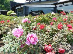 にしん御殿・小樽貴賓館(旧青山別邸)で牡丹&芍薬鑑賞 ◆peachで行く小樽・札幌・安平町《その5》