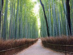 県をまたぐ移動の自粛解除直後の京都/嵐山の竹林と、三室戸寺の紫陽花を楽しむ~嵐山編