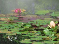久しぶりに池袋西武百貨店9階にある「睡蓮の庭」を訪問しました