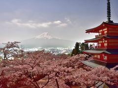 平成最後の桜巡り