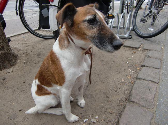 ベルリンで出会った犬を片っ端からカメラに収めてみました。