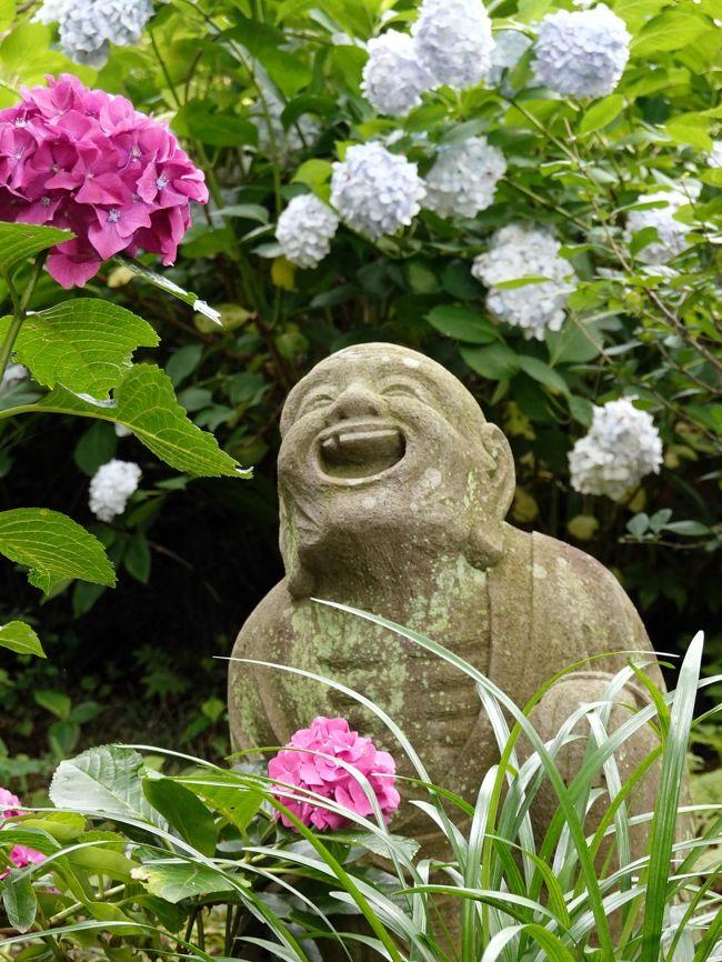 梅雨の中休み、かみさんと二人であじさい見物に出掛けました。<br />場所は柿生のあじさい寺こと浄慶寺、元和元年(1615)、地元麻生村領主三井氏によって創建された浄土宗の古刹、山号は麻生山、寺号は寿光院浄慶寺と唱えます。<br /> 地元では花の寺として有名で、特にあじさいは境内に約3000本植わり、柿生のあじさい寺が通称です。<br /> あじさいは丁度見頃、花と共にユーモラスな羅漢像が出迎えて呉れ、あじさいと羅漢のコラボが楽しめます。<br />又贔屓の寺が一つ増えました。