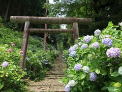 日帰り栃木<前編>紫陽花が咲き誇る太平山をハイキング