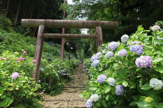 桜やアジサイ・紅葉の名所として知られハイキングコースとして人気がある栃木県栃木市の太平山(標高341m)と小江戸・栃木「蔵の街」を日帰りで回ってきた。<br /><br />==今回の旅の条件==<br />◆最寄り駅から普通列車で片道2時間以内<br />◆名物・ご当地グルメが食べられる<br />◆梅雨の風情を感じられる場所<br /><br />太平山へは新大平下駅から登山道を登って、あじさい坂から下山するコースを選択。