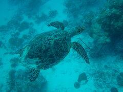 Maldives * ダイビング