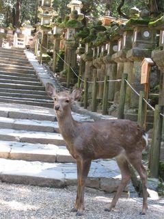 今年のお花見は古都・奈良と京都で楽しむぞ~奈良編二日目
