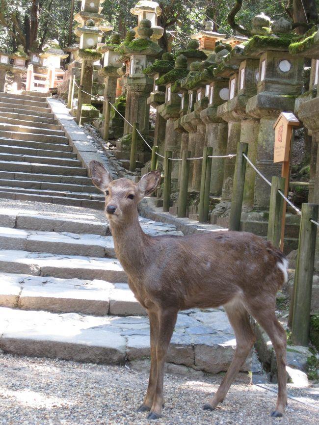 母念願の古都・奈良&京都お花見旅 今日一日奈良を楽しんでから京都に向かいます。