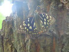 蝶の里公園