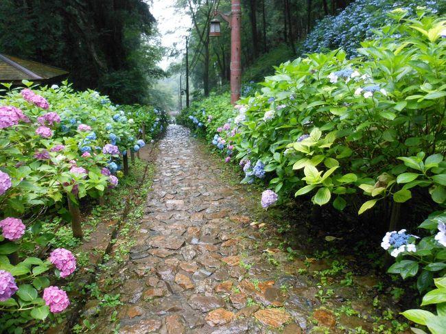 紫陽花を見たくて、またまたネット検索。<br />栃木県栃木市の大平山に、紫陽花があるとのことで、行ってみました。<br /><br />佐野ラーメンを食べてから、栃木市の大平山のあじさい坂で、雨の中をあじさい散策です。<br /><br />ちょうど、あじさいが綺麗な季節です。<br />初めてのあじさい坂です。<br /><br />そのついでに、佐野プレミアムアウトレットにも寄り道しました。<br />それから、いつものアグリタウンで、アイスクリームをいただきました。