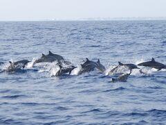 Maldives * ドルフィンサファリ&サンセットクルーズ