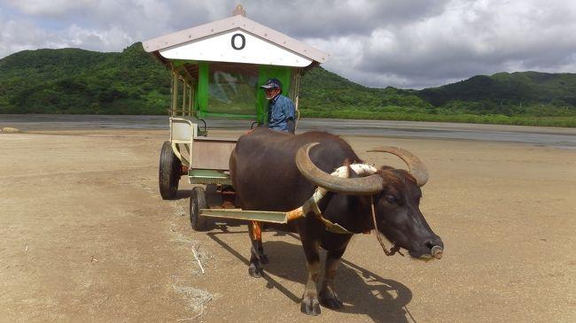 原チャリを借りて由布島へ向かいました。<br />引き潮の時間なので海を渡る牛車のイメージ都はかなり遠いですが約30分近くかけて島へ渡ることが来ます。<br />まだシーズンが始まっていないので乗客は私ともう一人だけでした。<br />島でウェルカムドリンクを貰ってからグル~と島を回りました。周囲2.5㎞の島なのでゆっくり歩いてもそんなに時間はかかりません。<br />展示施設もいくつかありますがう~んという感じです。<br />2時間ほどの滞在で原チャリで一路南風見田の浜へ向かいました。<br />ここは西表島東回りの道の終点の浜です。<br />シュノーケリングをしようとしましたがかなり潮の流れが強くて沖に向かってなかなか進めず疲れてドロップオフへなどへは行けそうになく諦めました。<br />適当にまったりしてから満潮時の由布島を見て宿へ帰りました。