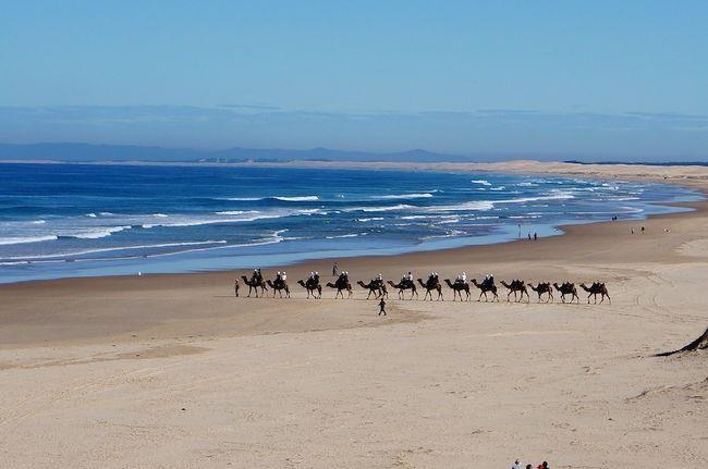 2020年6月ポストコロナ第1波の最初の旅は、シドニーから海岸線に沿って北上してニューサウスウェールズ NSW州/クイーンズランド QLD州境のツイードヘッズまで往復9日間のドライブ旅してきます。旅の目的はローカルにしか知られていない穴場のビーチを周る事、野生動物(コアラ・カンガルー・ホエール等)を探す事、QLD州境がどうクローズされているのかを確認すること、そして微力ですが観光業のブッシュファイヤとコロナウィルスからの復興を支援する事です。6月は冬のため海で泳ぐ事はできませんが、オフシーズンで人も少なくのんびりとしています。ホリデーコースト(現地ではこう呼びませんが)は日本ではあまり知られていない地域ですが、他にもサーフィン・釣り・ゴルフなどに特化した目的にも良い旅行先です。<br /><br />ニューサウスウェールズ NSW州では6月1日から州内の旅行禁止が解除されて、ようやくコロナ後にNSW州と南側のVIC州内の旅行に行く事ができる様になりました。この機会にNSW州北部のローカルの旅をしてみることにします。この時期に旅行することに賛否あるでしょうが、出発当時のNSW州の新規コロナウィルス国内感染者は週に10人以下で、ほとんどが海外からの帰国隔離者(しかし南側のVIC州は感染者急増して、7/1からメルボルンの一部が再ロックダウンされました。もし反対方向のメルボルンに向かっていたら途中で引き返していたと思います)。まだコロナウィルスが完全に消えた訳ではないので不安もありますが、車で移動し他人との接触を避ける、人の少ない穴場スポットを中心に周る、出発前にステイホームして自身の陰性を確認する、とリスクを減らした上でポストコロナの旅行を再開することにします。