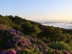 秩父・美の山のあじさいを見に行ってみました。そこは想像以上の景色でした。