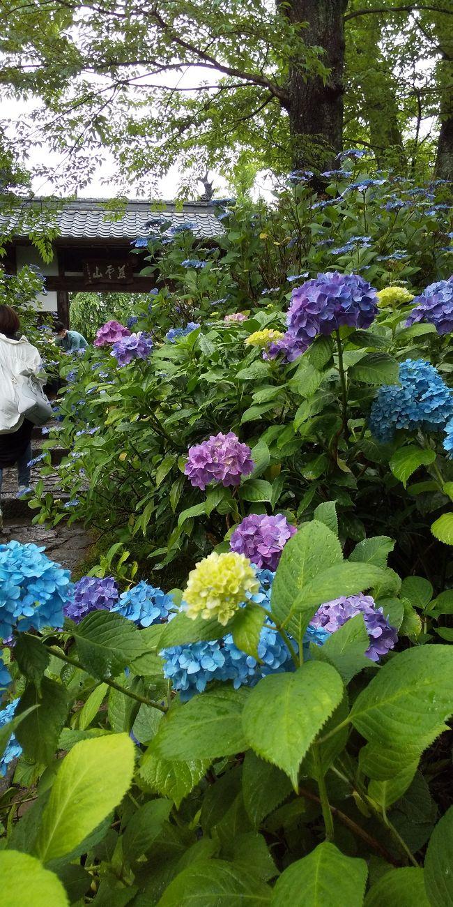 おばあちゃんからの梅干しを友人たちが首を長くして待ってました。渡すついでに、ご近所のお寺に行ってみる?ってことになりました。、<br /><br />
