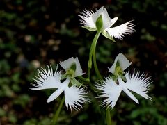 馬場花木園散歩 7月の花(32種)